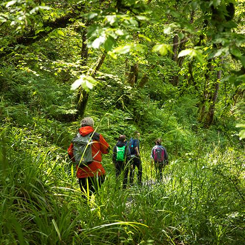 Cladagh Glen Nature Reserve Walk Is Open