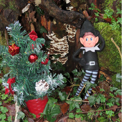 New Activity Alert- Elf Escape at the Marble Arch Caves